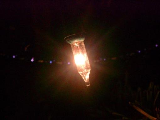 baumlicht1